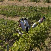 Bodegues Pinord, Mas Blanc D.O.Q. Priorat