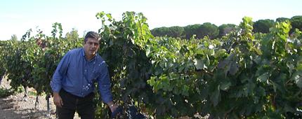 Viñas Vaquos Ribera del Duero 3